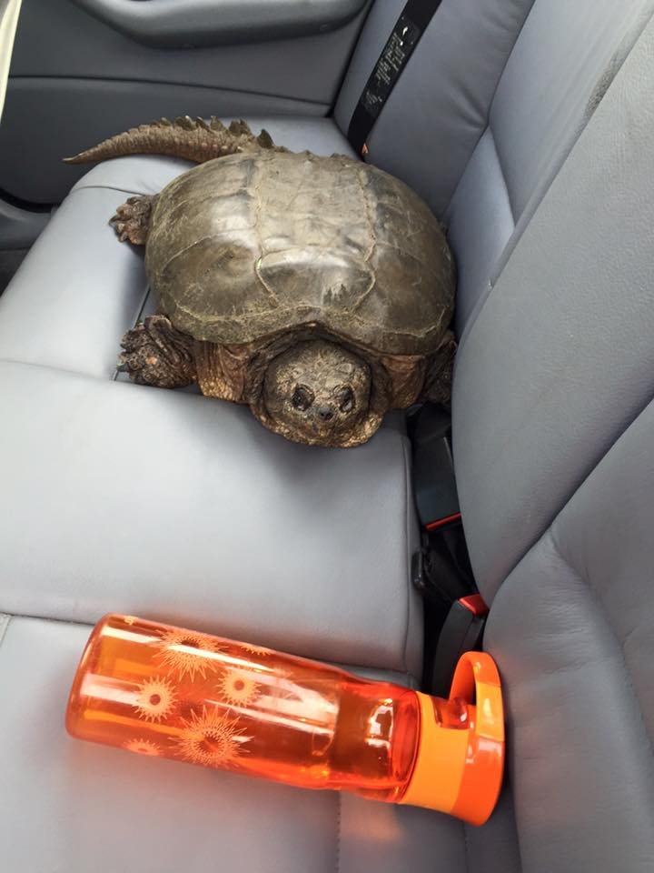 My gift that came in a Turtle…Meet lucky.